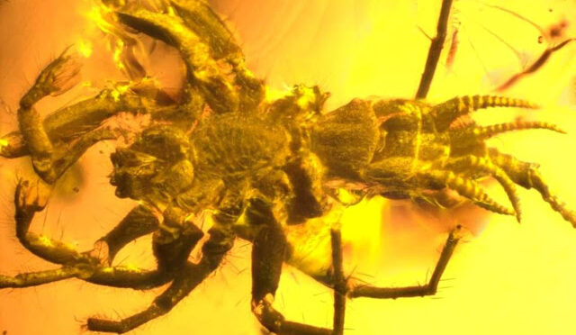 Spider-Like Creature With a Tail Was Just Found in 100 Million-Year-Old Amber