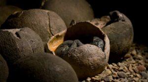 Boy finds 66-million-year-old dinosaur eggs