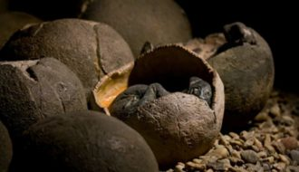 Boy finds 66-million-year-old dinosaur eggs