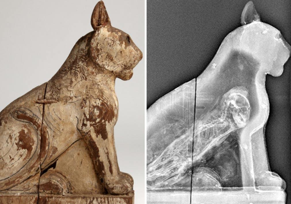 70 Million Mummified Animals in Egypt Expose Ancient Mummy Origin