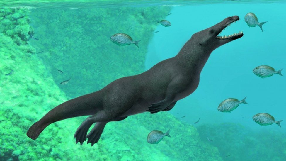 Fossil of ancient four-legged whale found in Peru