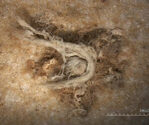 50,000-Year-Old String Shows Neanderthals Were Technologically Advanced