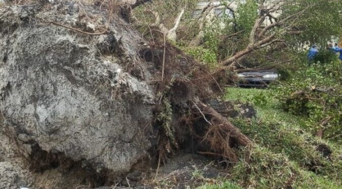 Toppled Trees in Florida Reveal 19th-Century Fort where 270 escaped slaves died
