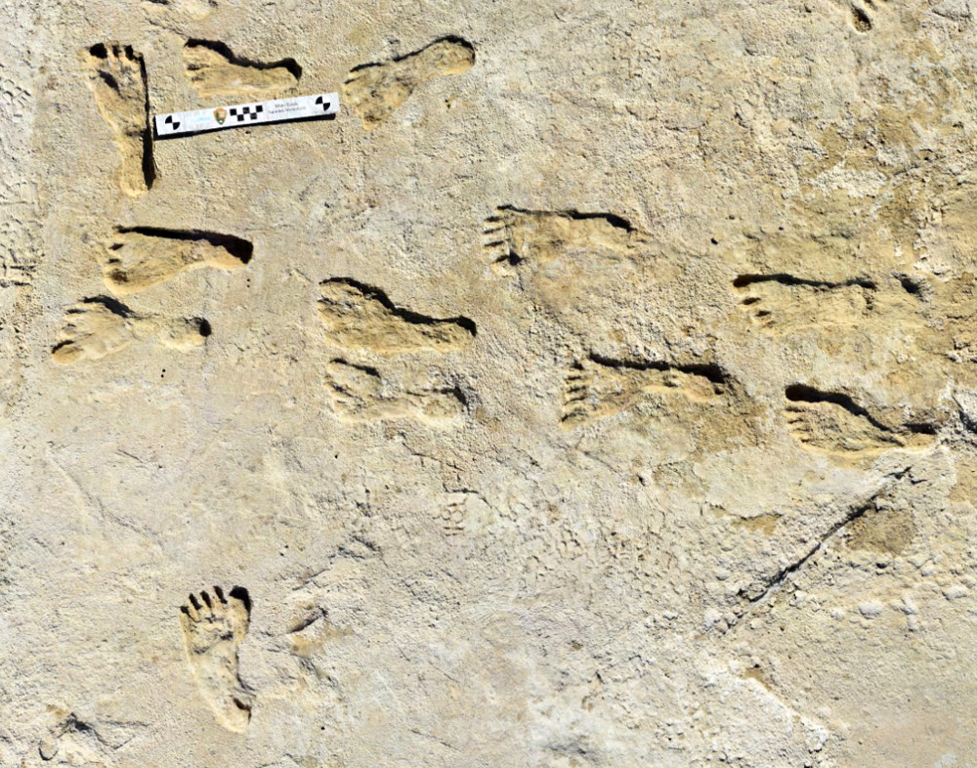 Around 23,000 years old human footprints in North America were found in New Mexico